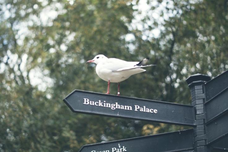 Buckingham Palace (14)