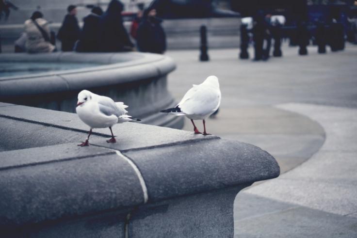 Trafalgar Square_Chloe Keogan (4)